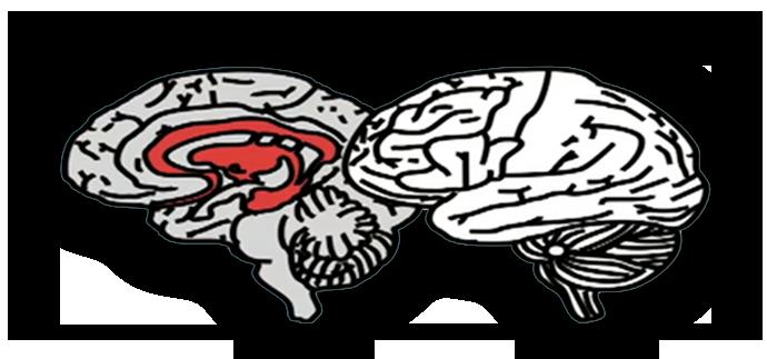 Adolescent_Brain_crop_blank